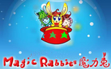 魔力兔magic rabbit